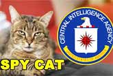 How The CIA Tried To Train A Cat To Be A Spy